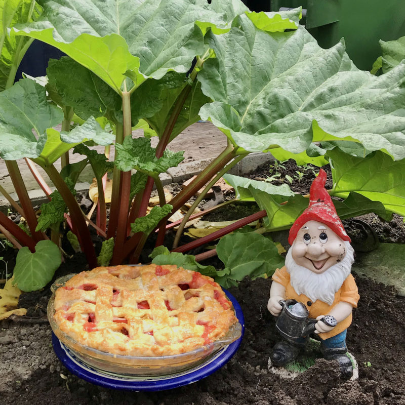Downtime Freshly baked Rhubarb pie in the garden by a Garden Elf
